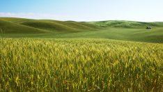 Biyoetanol – Şeker pancarından biyoetanol üretimi