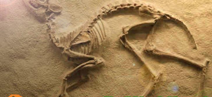 Fosil Nedir ve Nasıl Oluşur?