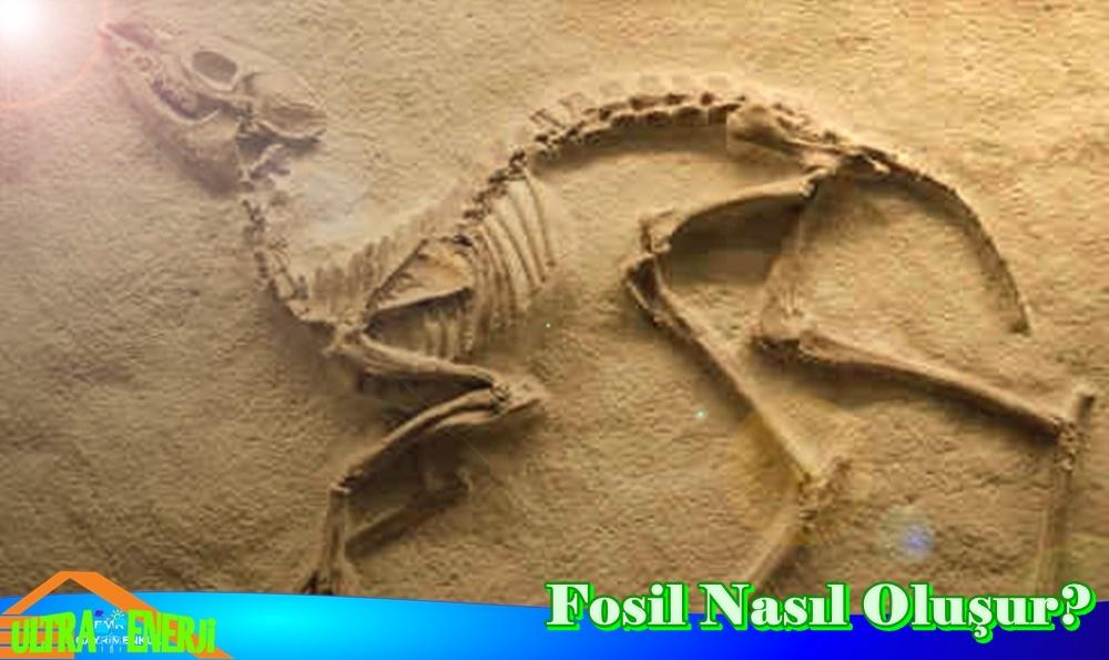 Fosil Nedir ve Nasil Olusur - Fosil Nedir ve Nasıl Oluşur?