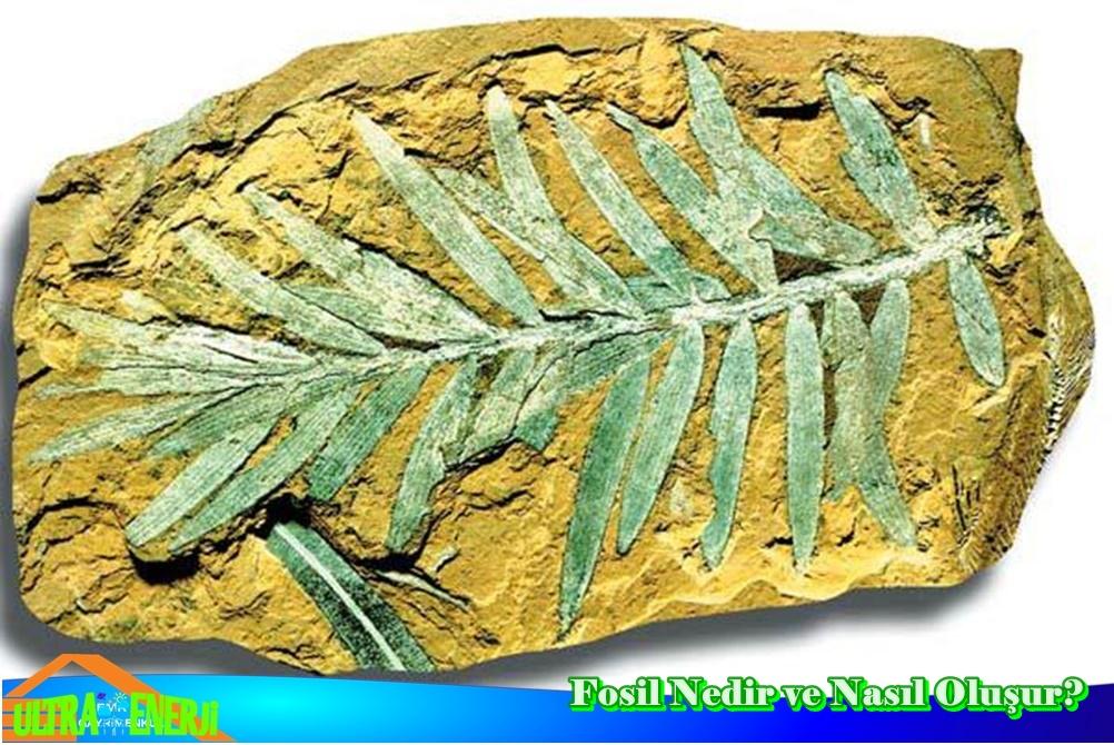 Fosil Nedir - Fosil Nedir ve Nasıl Oluşur?