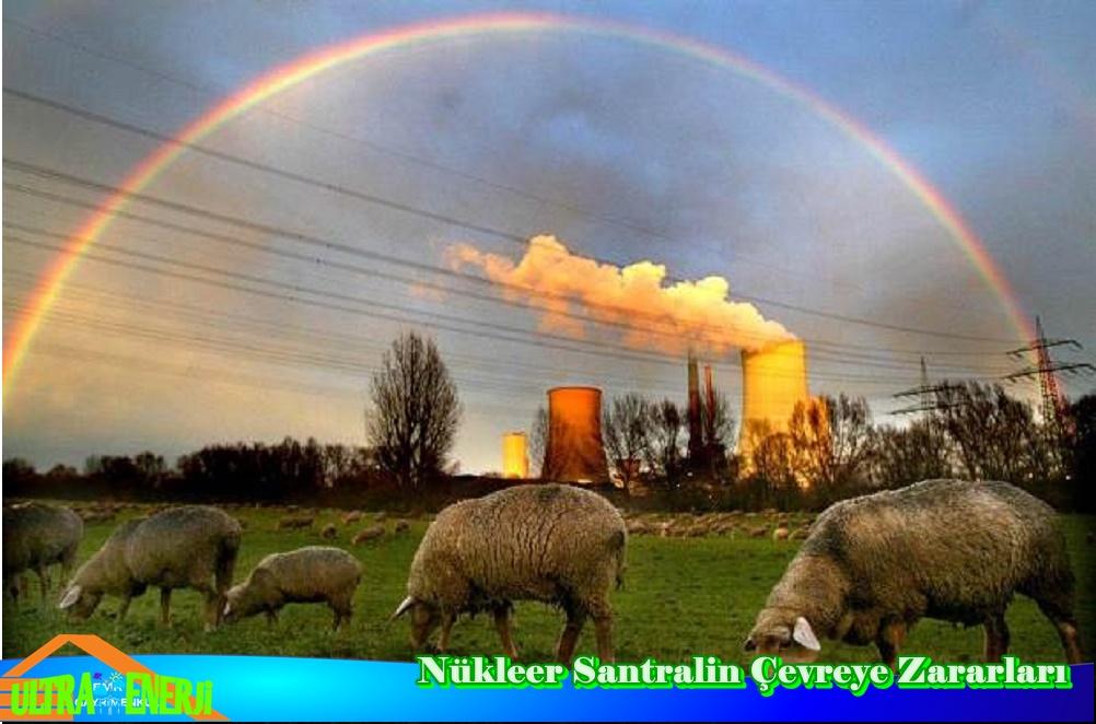 Nukleer Santrallerin Zararlari1 - Nükleer Santrallerin Zararları