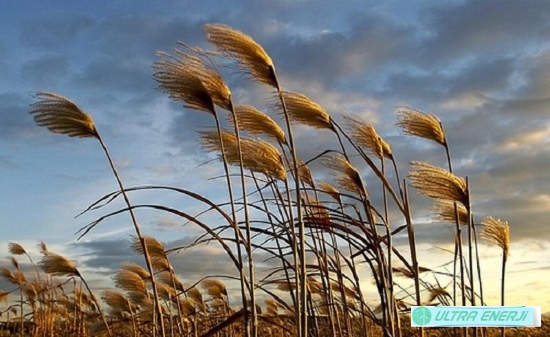 Rüzgarların Yönlerine Verilen İsimler